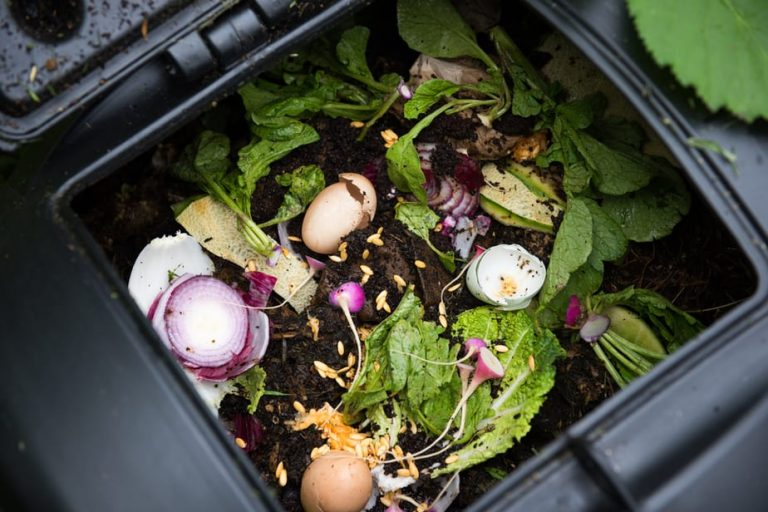 The Best Compost Grinder for Home Use: Top 5 Options 2020