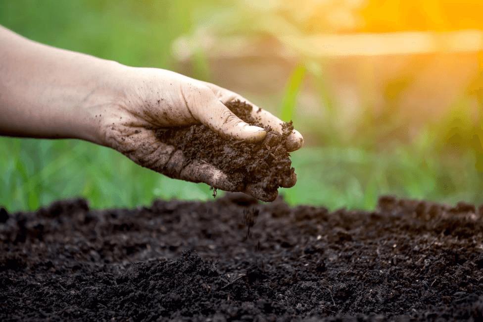 Amendments to the Soil
