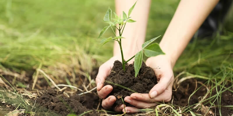 Planting the Plants!