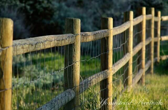 Rustic Wood Goat Fence