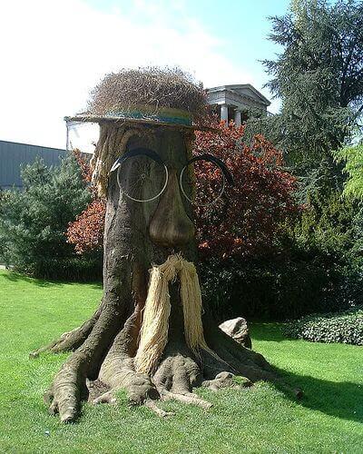 Tree Stump Transformation