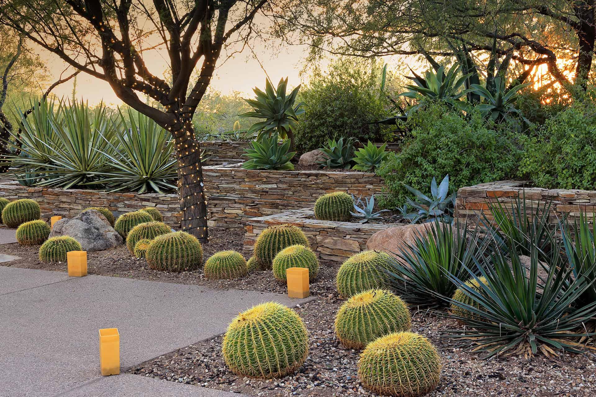 Little Desert-Propelled Rock Nursery