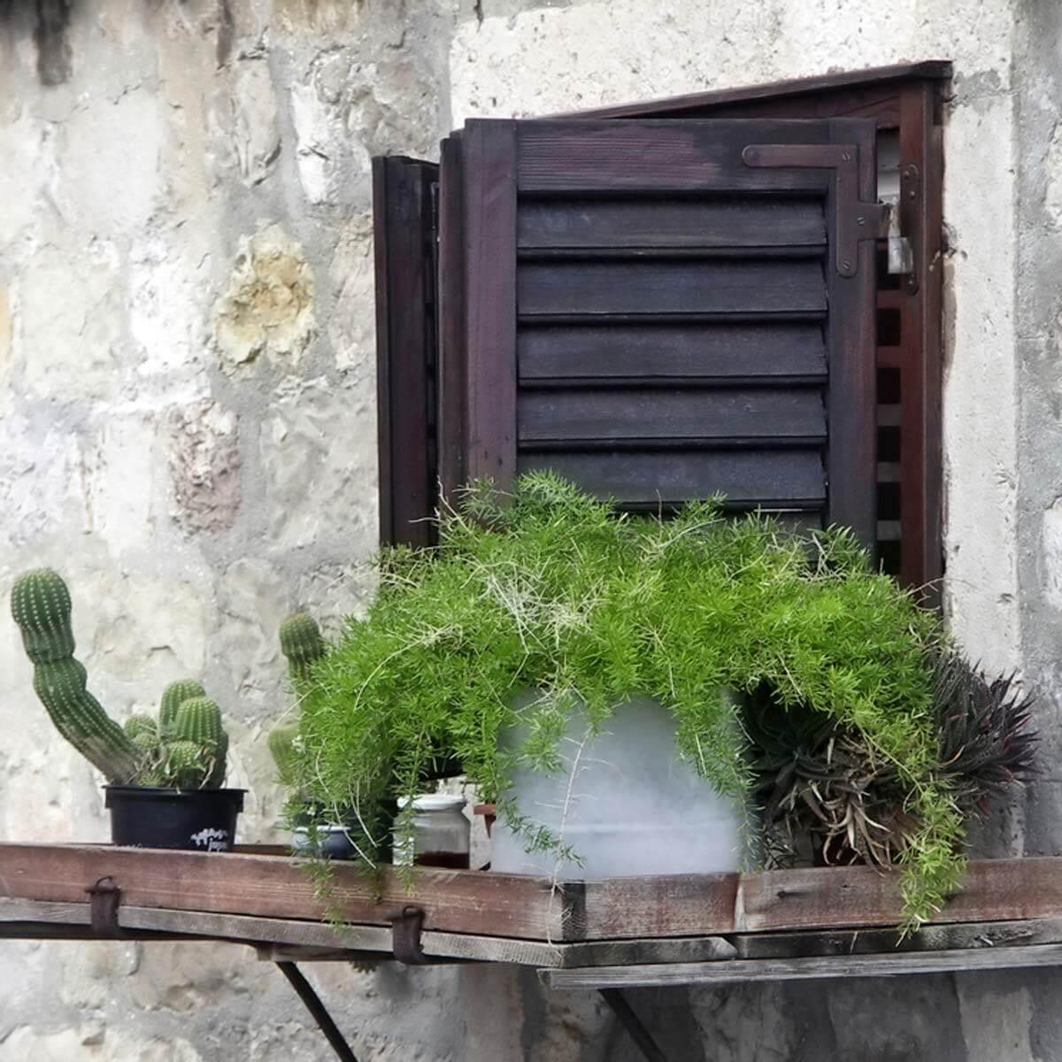 Portable Plants