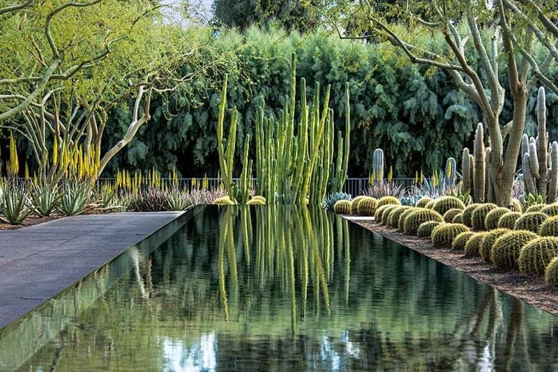 Cacti Reflection