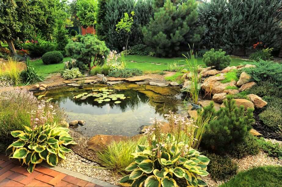 A Peaceful Pond