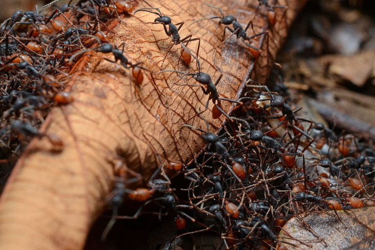 How to Get Rid of Ants in Grass Naturally and Permanently