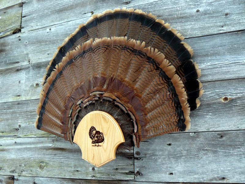 Tail Fan