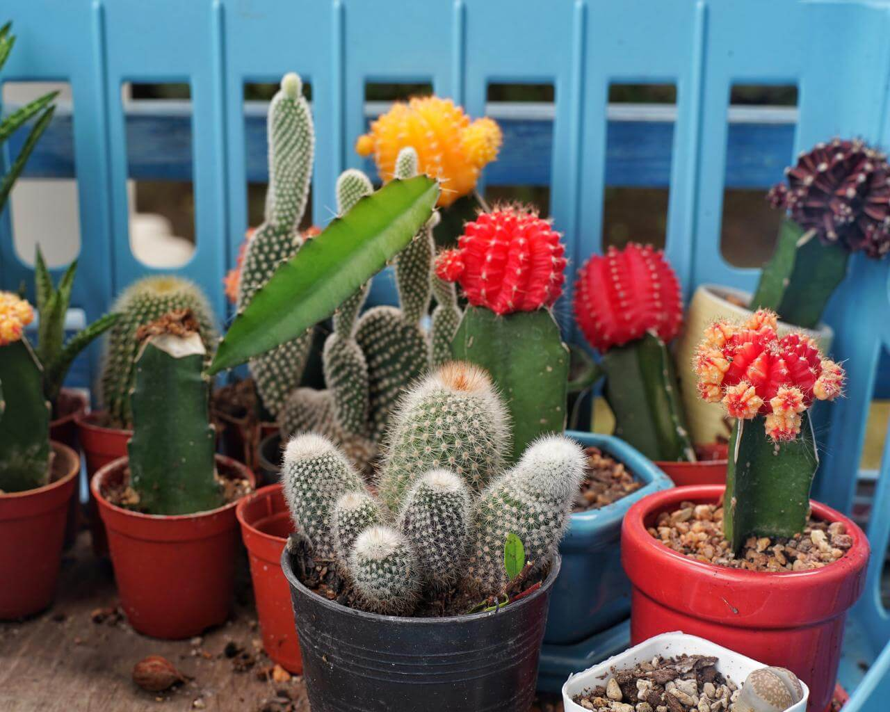 Top 26 Easy to Maintain Desert Plants for Your Home and Garden