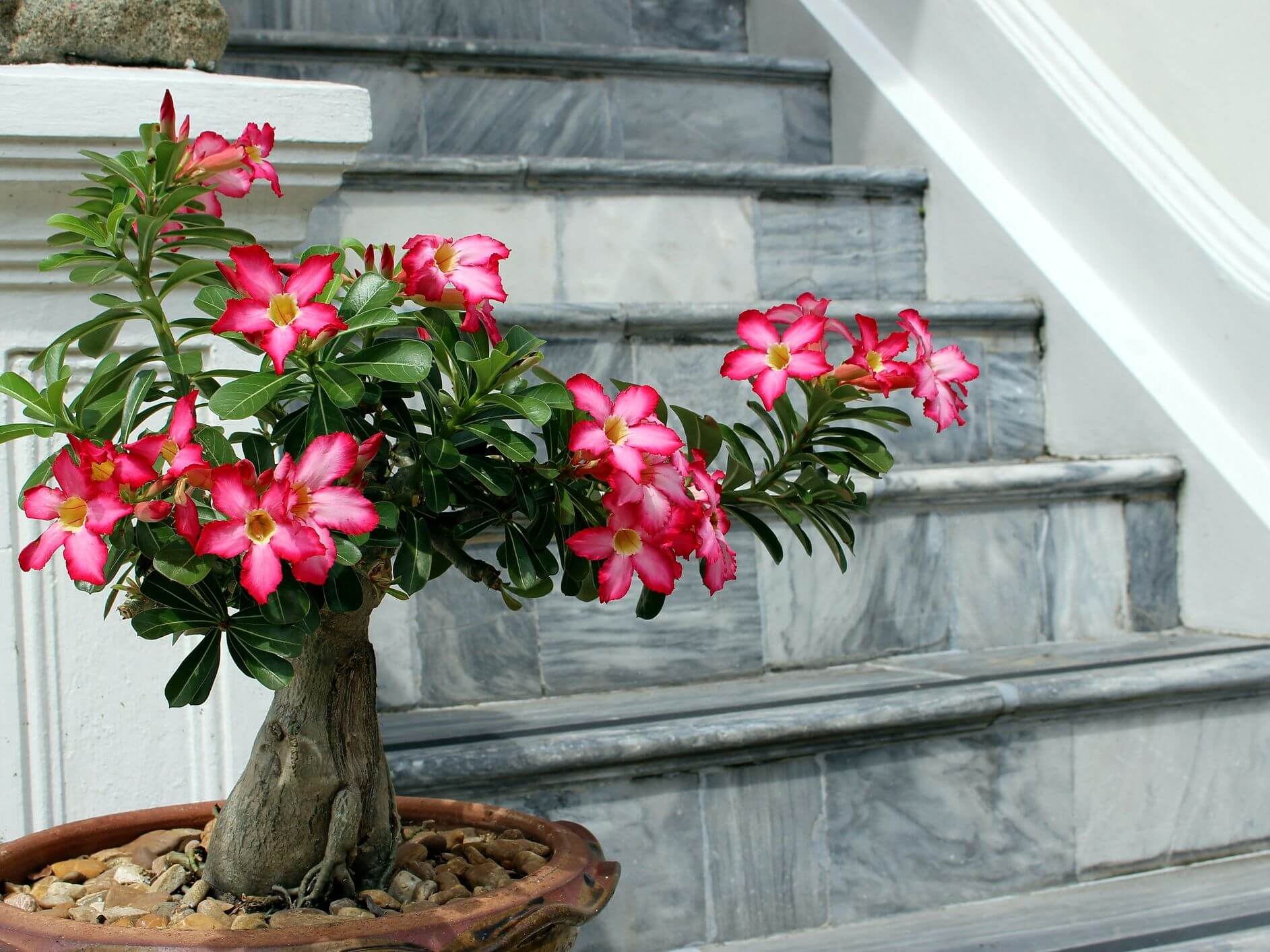 20 Unique, Cool, and Unusual Houseplants You Need to Grow