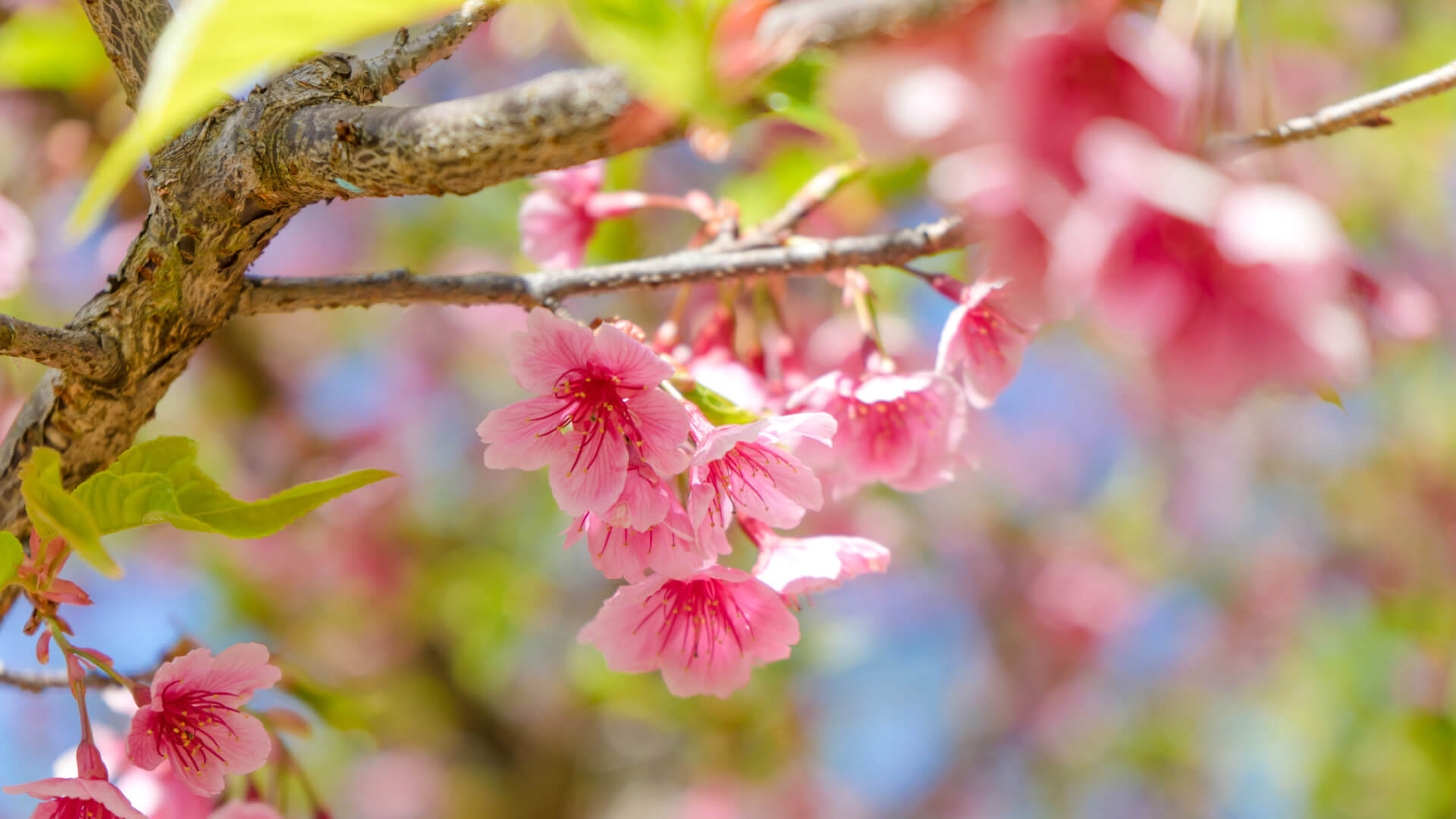 20 types of flowering trees with pictures for easy identification