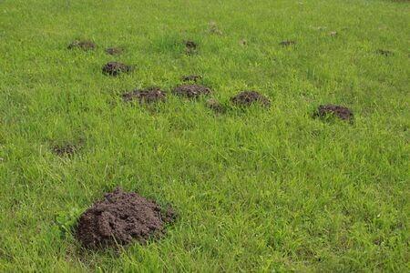 Animals Digging in Yard