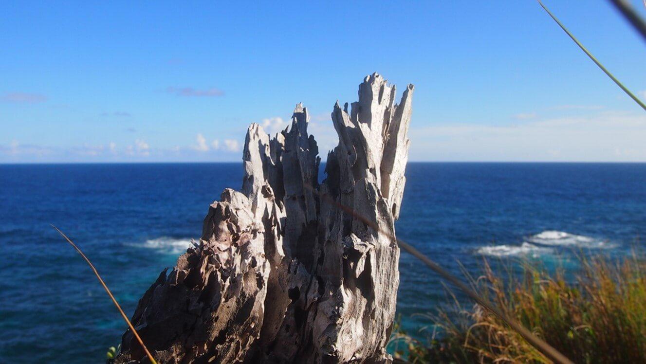 Bermuda Cedar