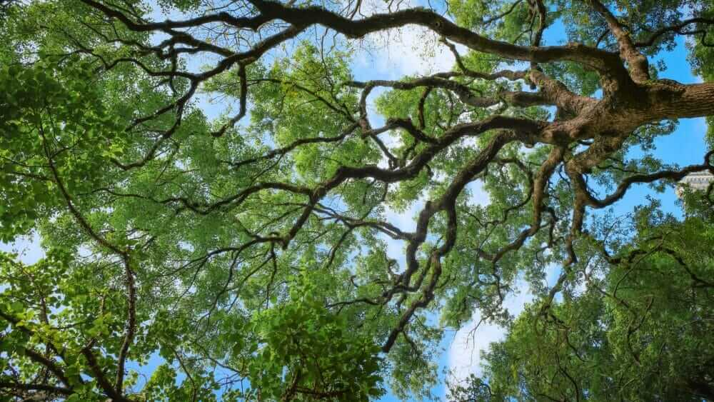 Different Types of Trees with Their Names and Pictures for Easy Identification