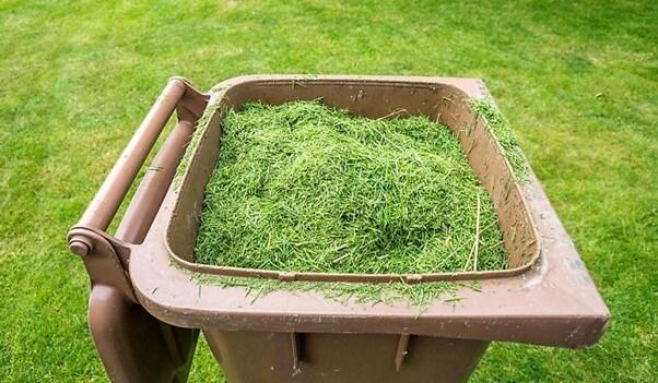 Grass in Dustbin