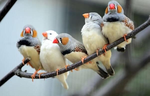 How Birds Sleep