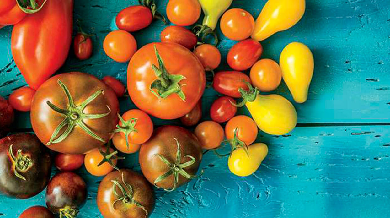 How to Grow Tomatoes in Arizona and 10 Tips for Growing Tomatoes?