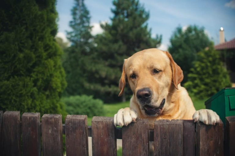 How to Keep Your Neighbour Dog Out of Your Yard?