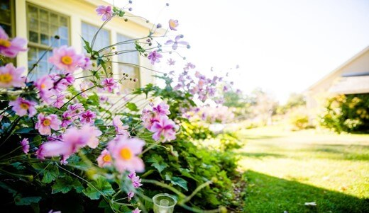 Natural Methods to Get Rid of Weeds
