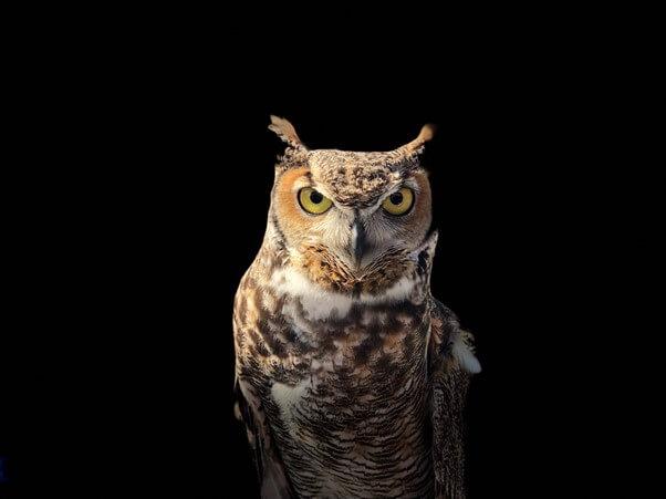 Owls and Nighthawks