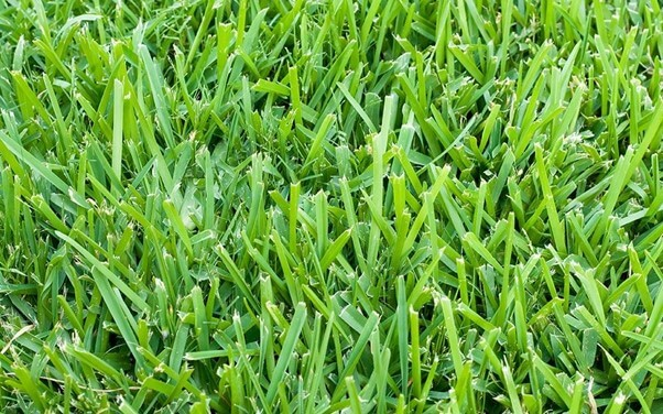 Right Type of Grass Seed