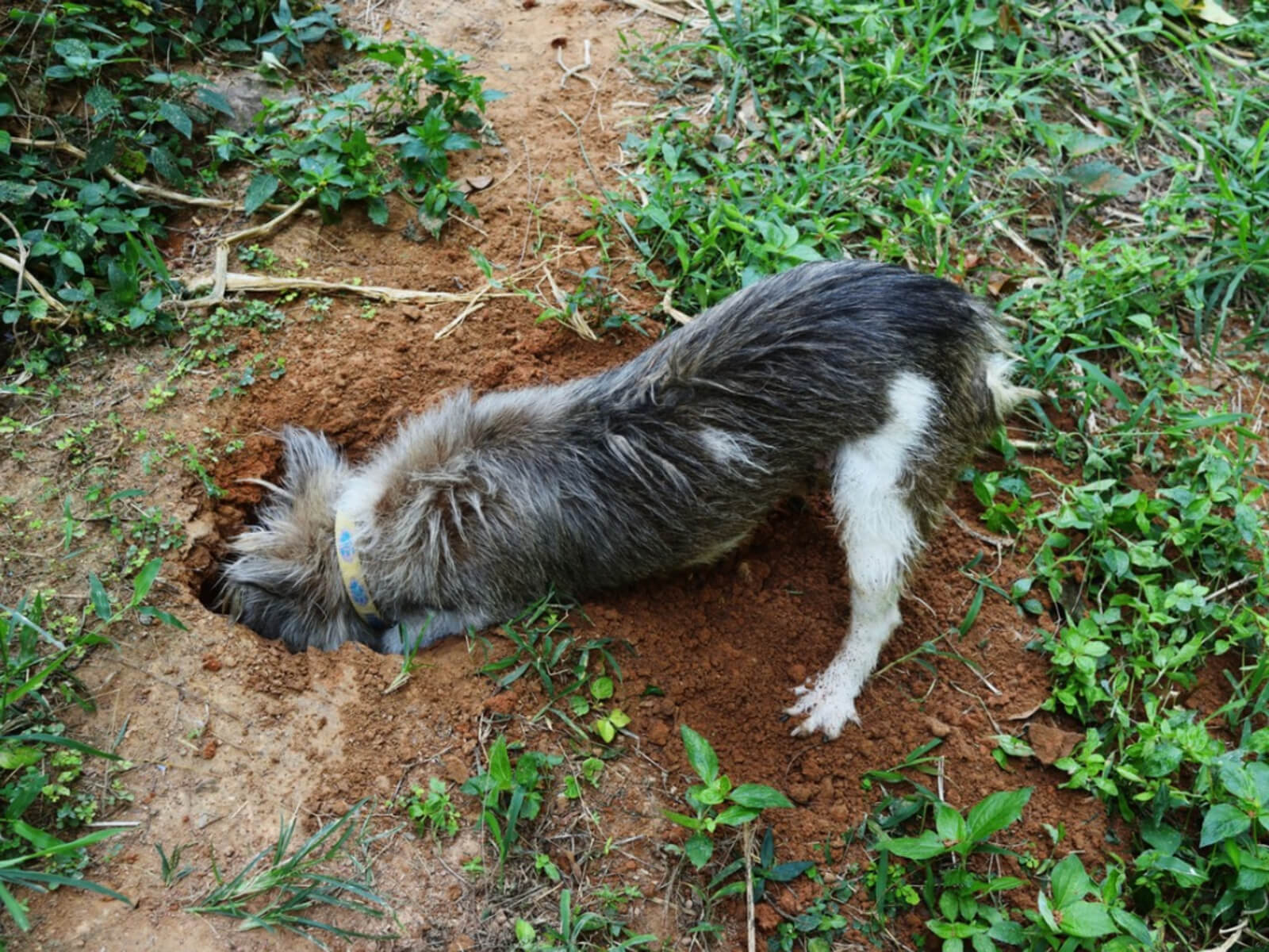 Simple Tips to Stop Animals from Digging in Your Yard