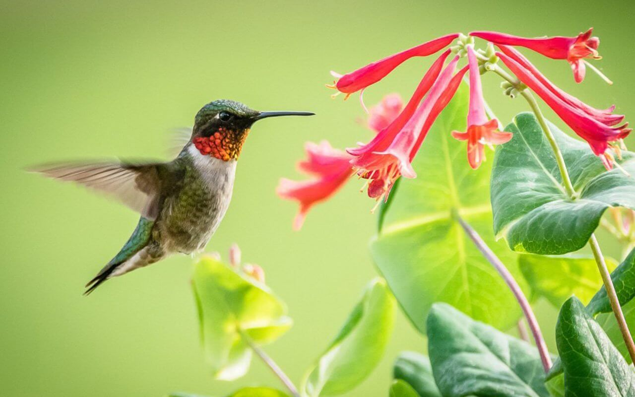 Tips for Placing Your Hummingbird Feeder