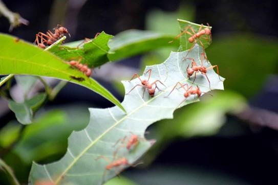 Types of Tree Ants
