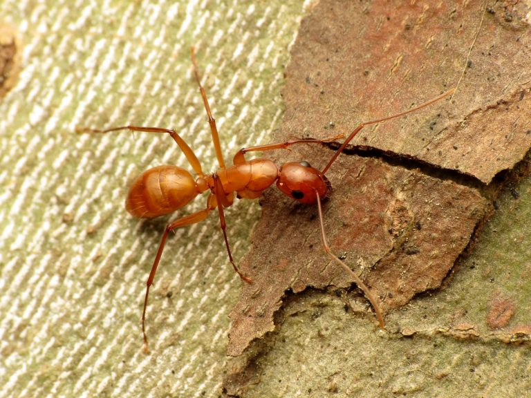 What to Do If Your Tree Is Infested with Ants-The Complete Guide