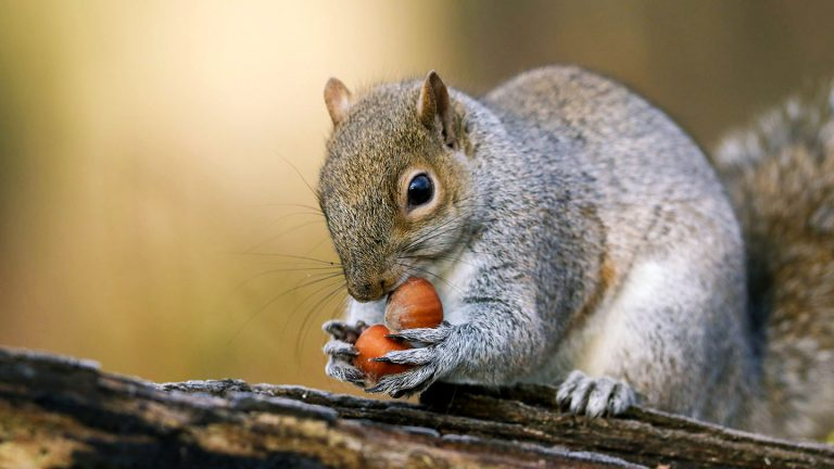 What to Feed Squirrels – Everything You Need to Know
