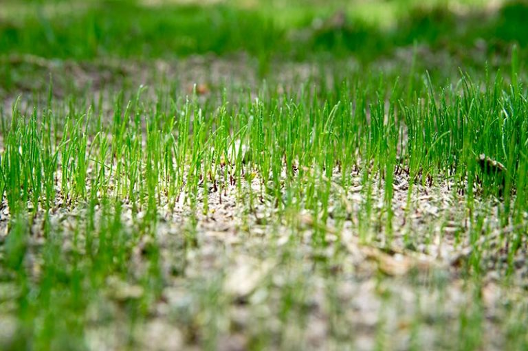 When to Fertilize New Grass for Best Results
