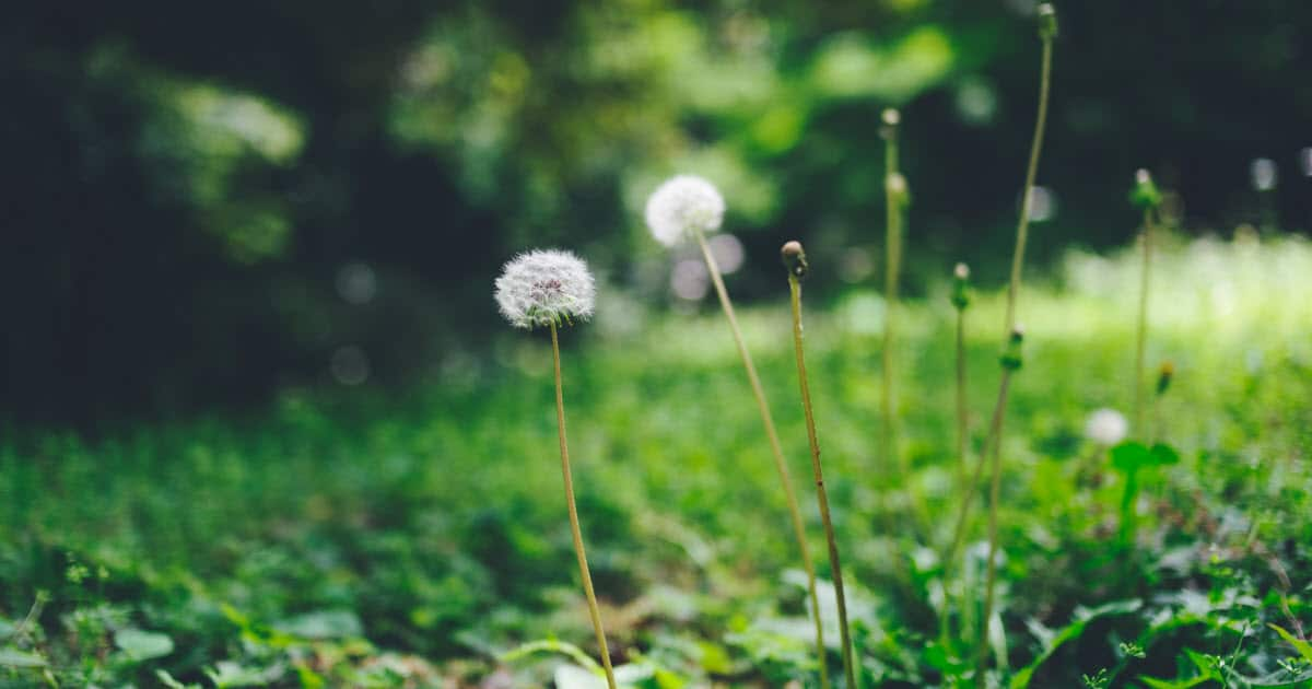 10 Effective Ways to Get Rid of a Lawn Full of Weeds