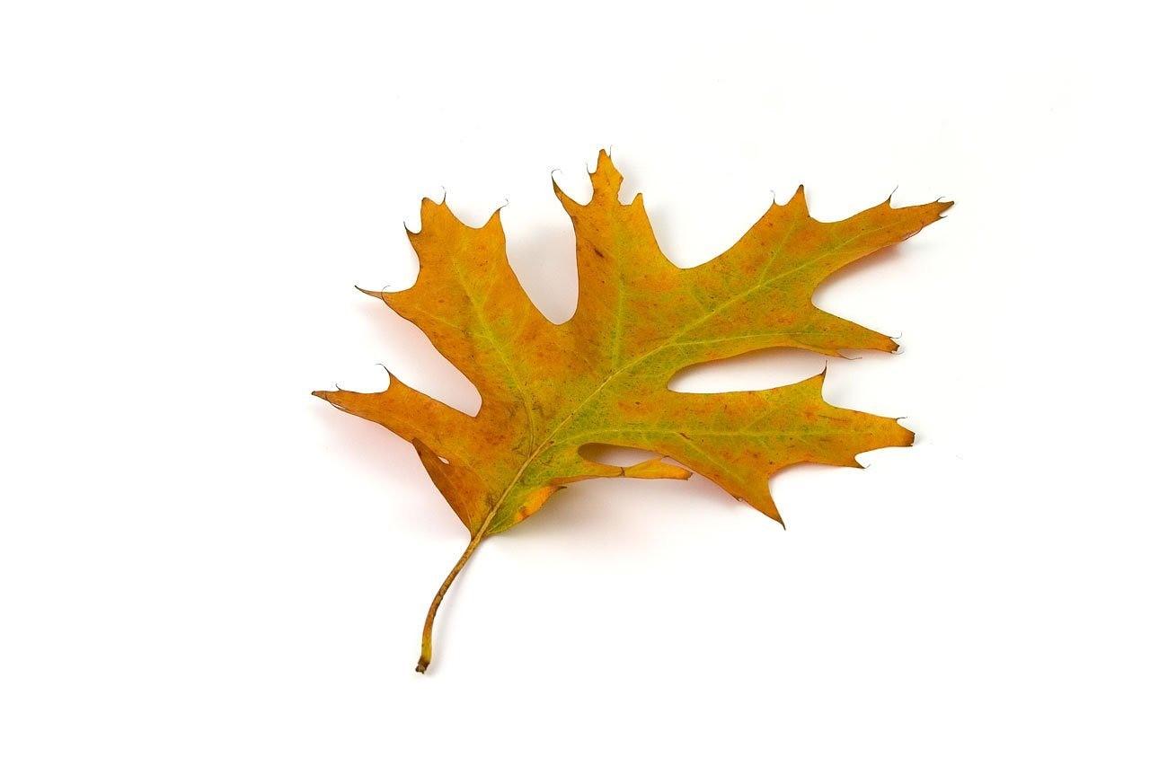 shape leaves