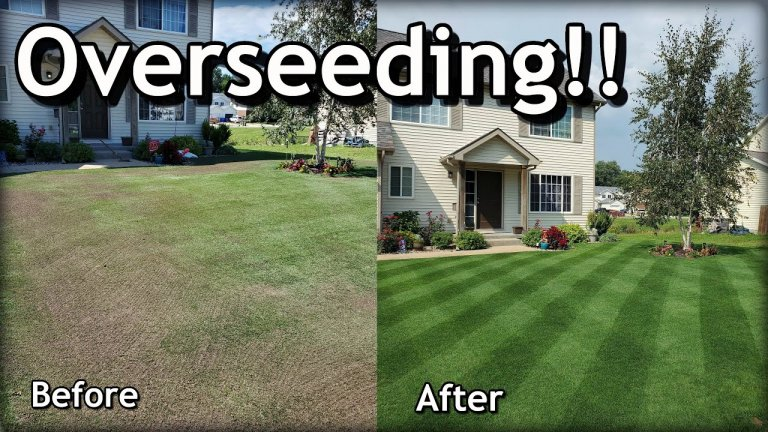 Overseed a Lawn
