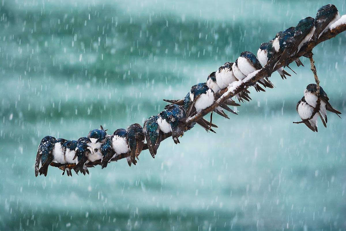 Where Do Winter Birds Go at Night