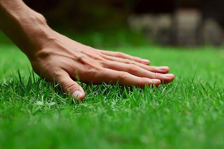 5 Creative Ways to Cut Grass Without A awn Mower