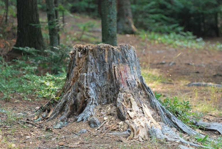 5 Methods for Tree Stump Removal!