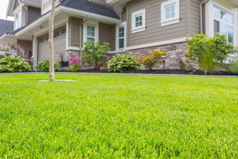 Best Grass for Sandy Soil [5 Grasses that Grow Well on Sandy Lawns]