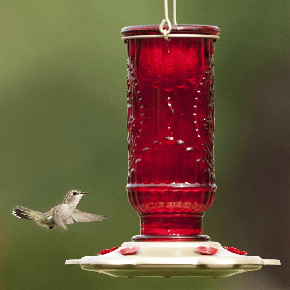 Factors Determining the Placement of Hummingbird Feeder