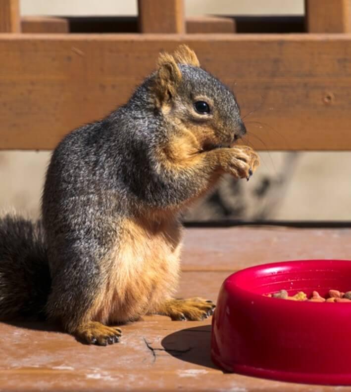 Feeding During Winter