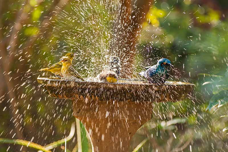 Hanging Your Feeder in the Fountain