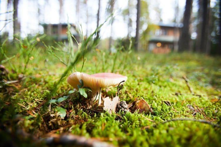 How Do Mushrooms Spread