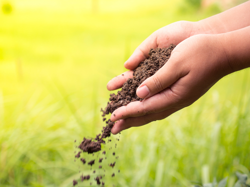 How to Apply Ironite In Your Lawn