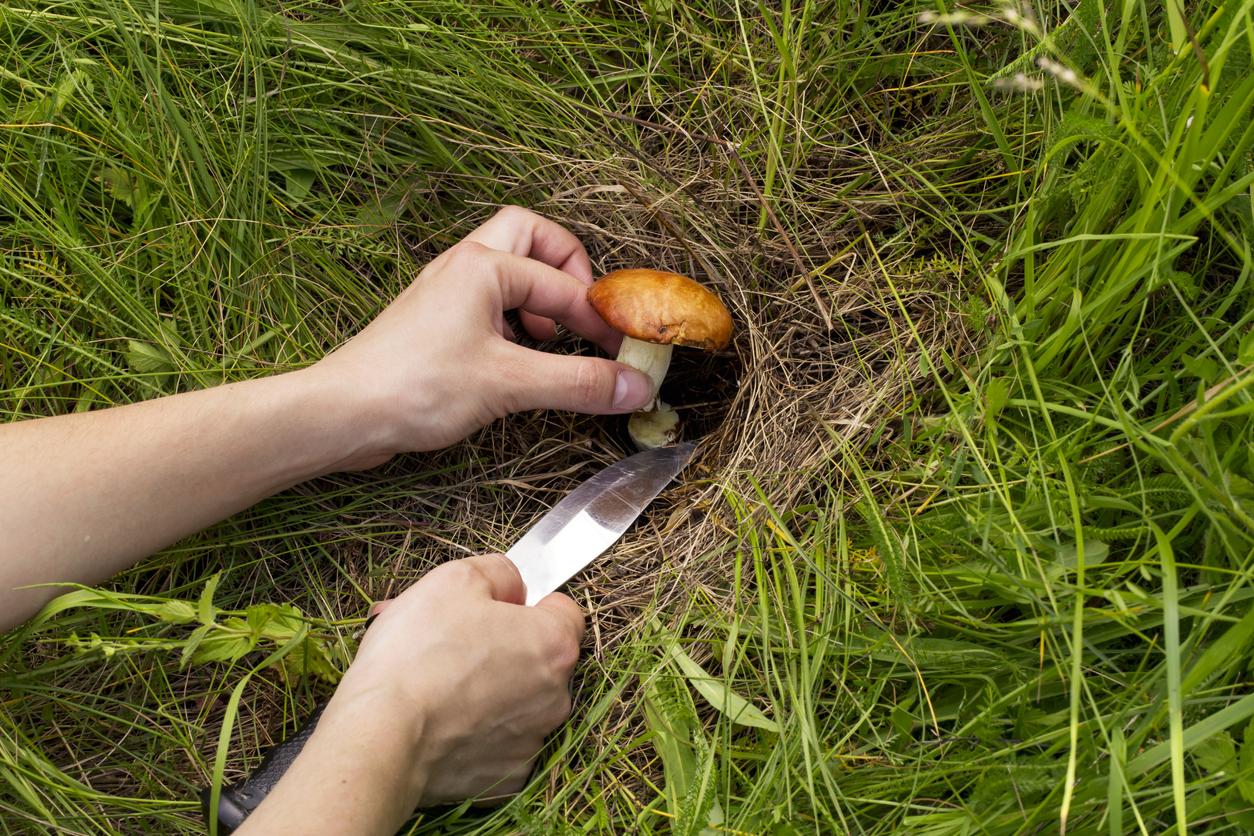 the edible mushrooms
