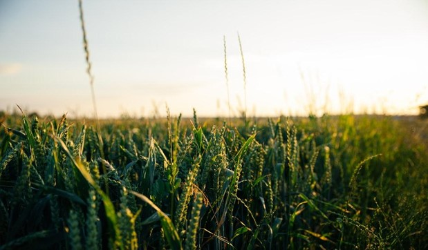 How to Make Money Farming 5 Acres or Less