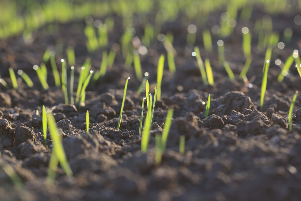 How to Plant Grass Seed on Hard Dirt
