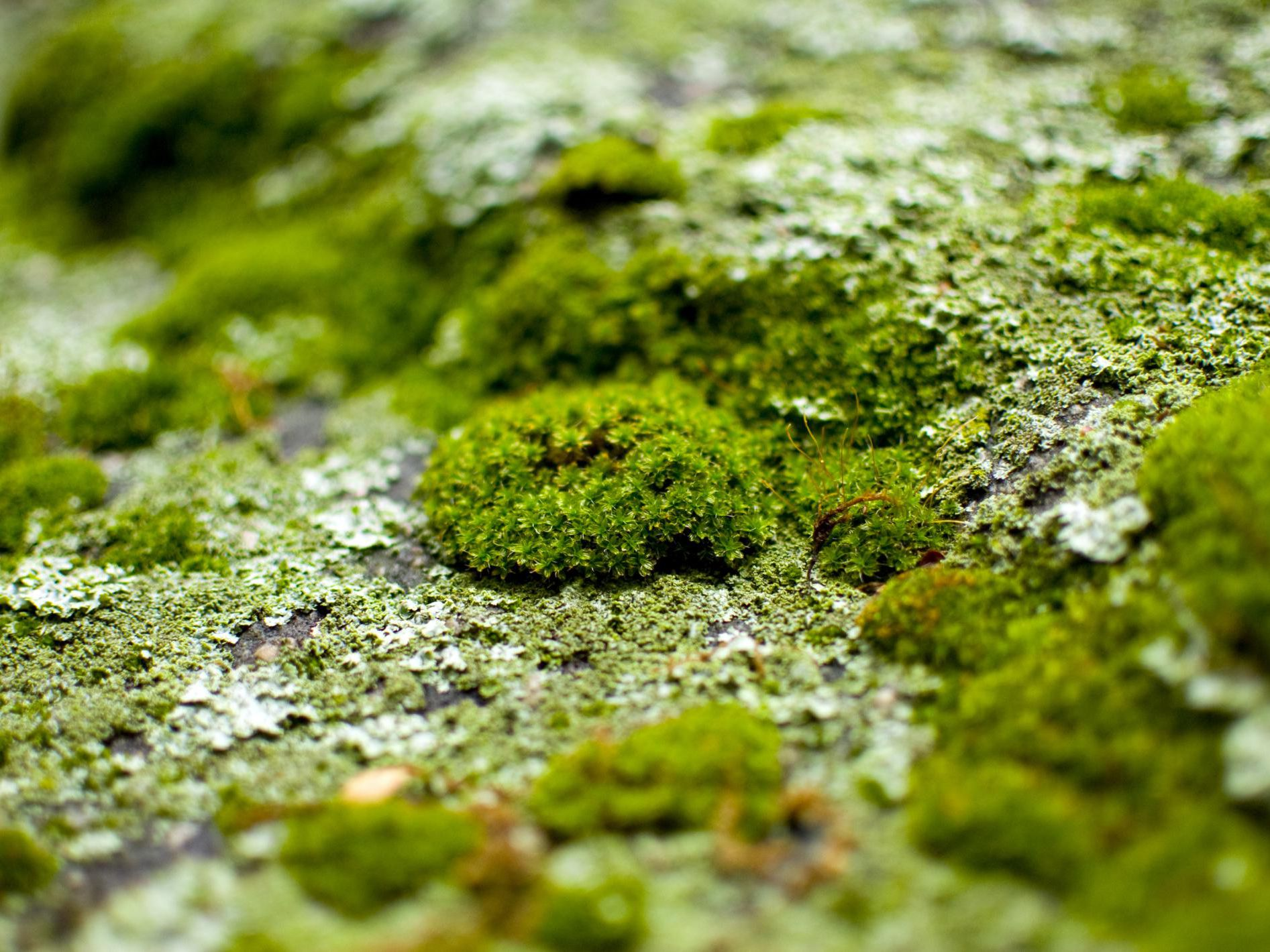 How to Prevent the Growth of Moss