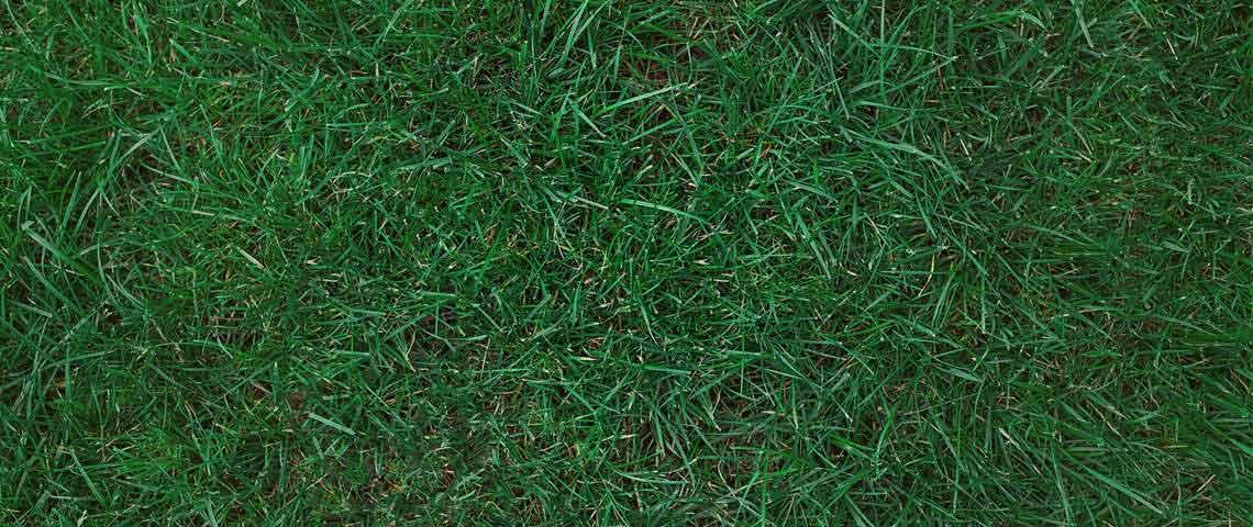 Kentucky Grass