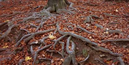 Killing Tree Roots
