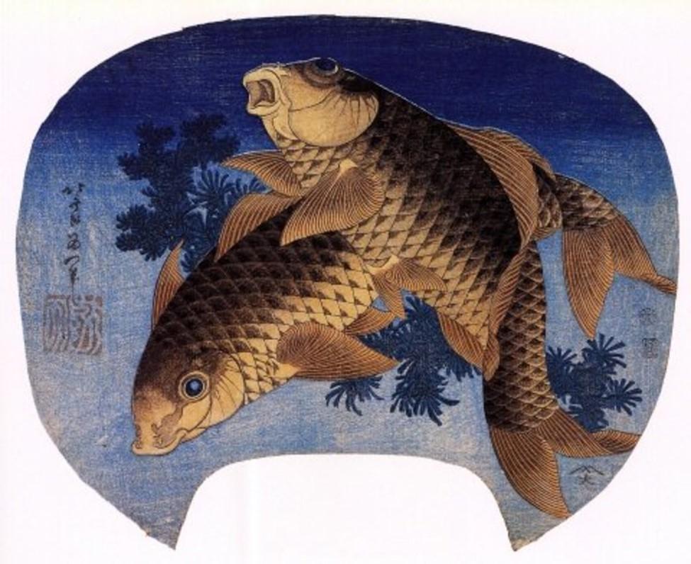 Koi Fish- Culture and Cuisine