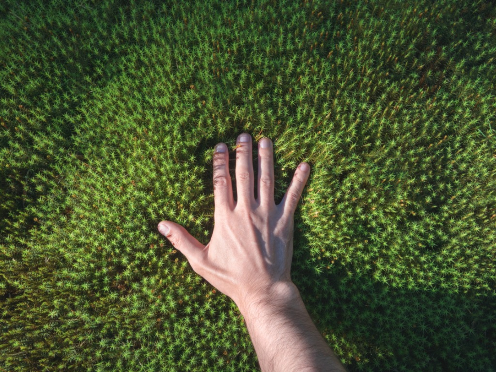 Moss in Lawn Guide